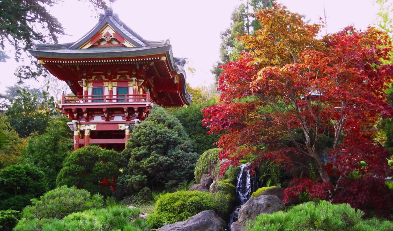 japanese, янв, чая, garden, gate, золотистый,