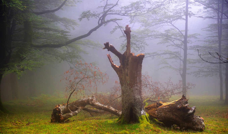 природа, туман, великобритания, лес, дымка, summer,
