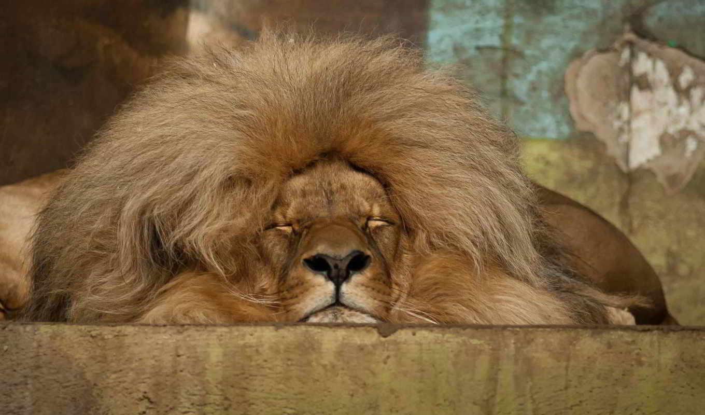 lion, тебя, that, апатия, меня, головой, накрывает, slowly,