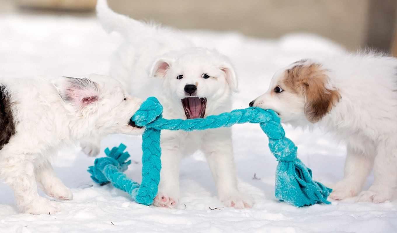 собака, снег, dogs, puppies, winter, playing, щенок,