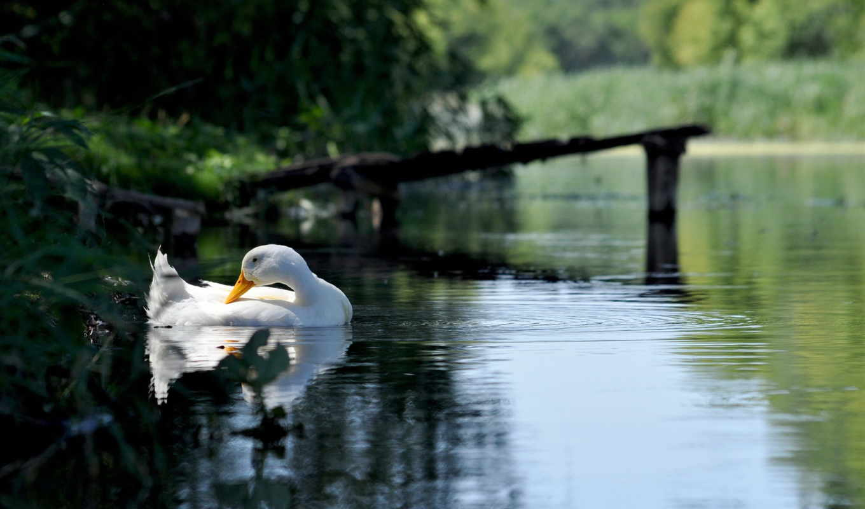 high, качество, есть, birds, free, мост,