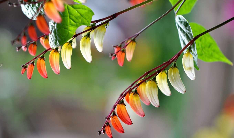 amazing, pictures, free, природа, photos, flowers, images,