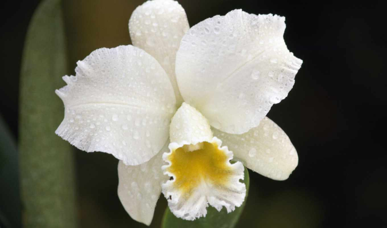 цветы, растения, красиво, wallpaper, орхидея, картинка, orchids, nền, hình, flower, природа, image, allimg, hoa, iphone, wallpapers,