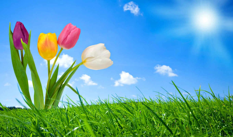 nature, spring, wallpapers, hd, wallpaper, природа, free, air, солнце, widescreen, цветы, jordan, and, natural, depresyon, shoes,