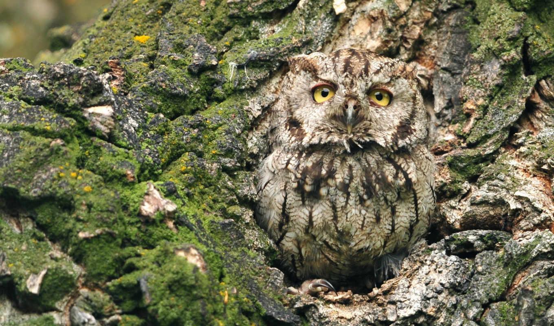 sowa, дерево,природа,совенок,