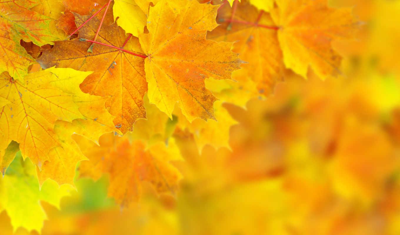 Обои осень, желтый, вектор. Минимализм foto 13
