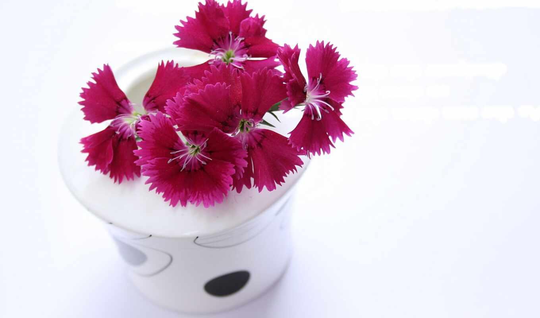 цветы, fondos, flores, ваза,