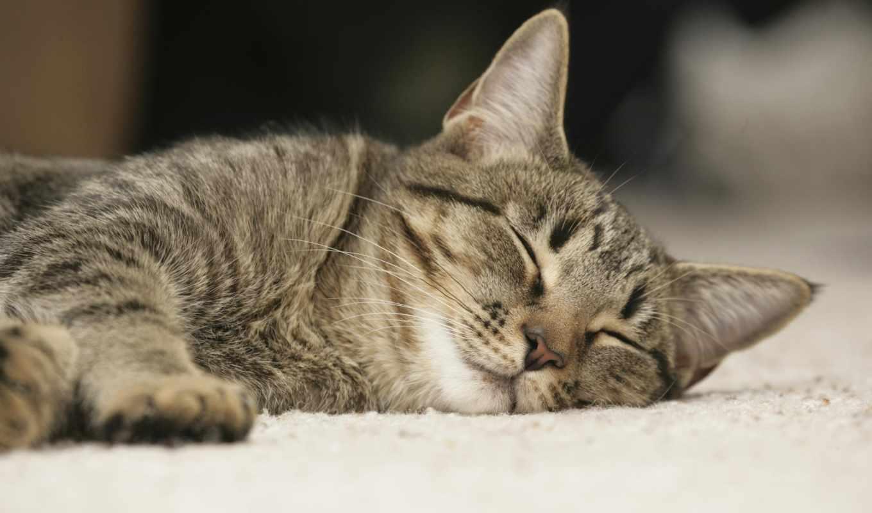 кошка, son, спит, kot, отдых, kartinka, котенок, кошки,