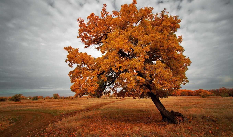 осень, дерево, природа, landscape, поле,