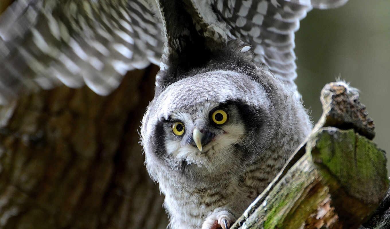 сова, птица, ку, птицы, красивые, owl, look, bird