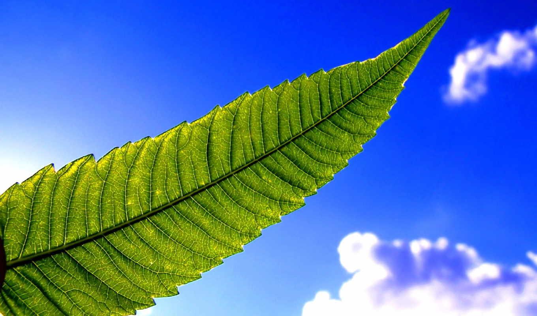 небо, blue, листва, ogorodua, трава, неба, fone,