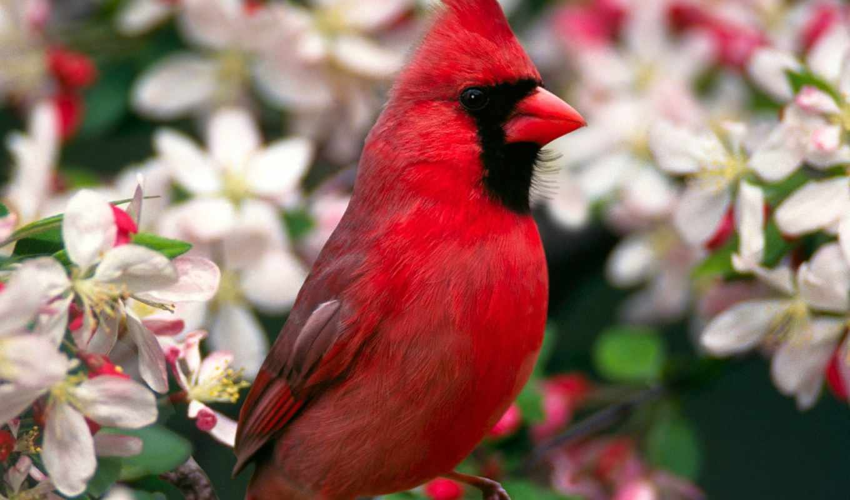 птицы, птица, zhivotnye, сайте, птиц,
