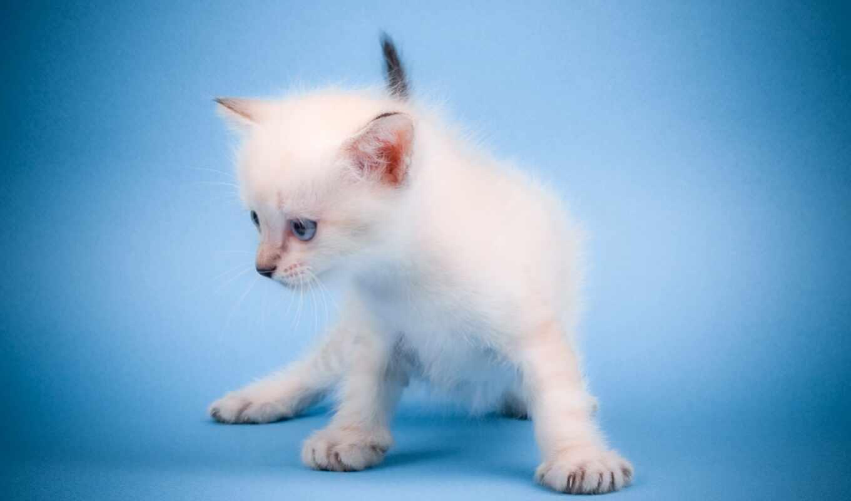 animal, cute, mew, кот, увеличить, detail