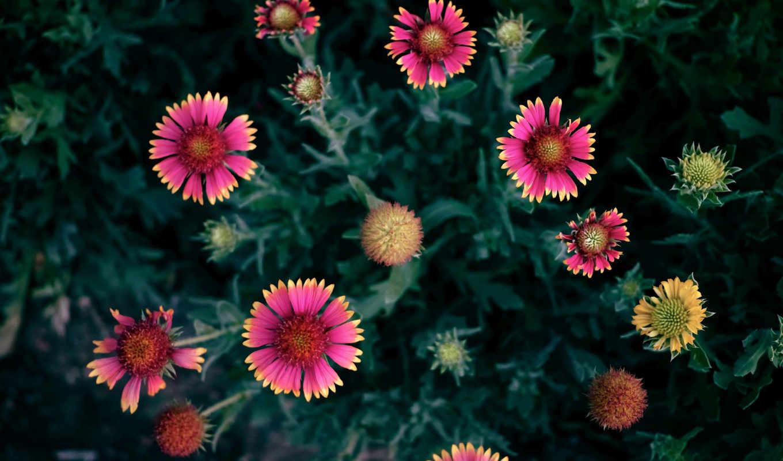 яркие, цветами, фотографии, видов, различных,