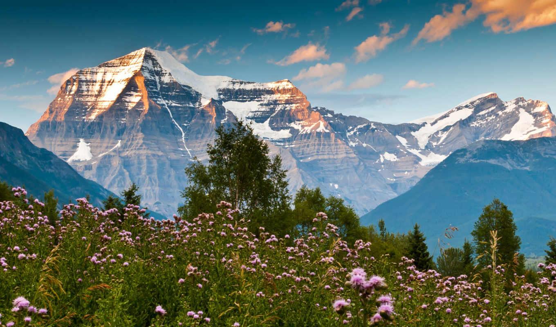 горы, цветы, summer, гор, полевые, fone,