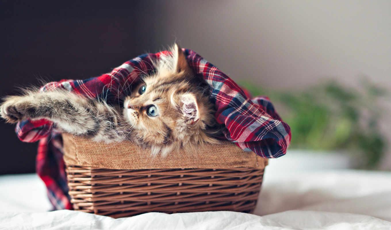 torode, бен, daisy, корзина, фотограф, кот, котенок, eyes, дэйзи,