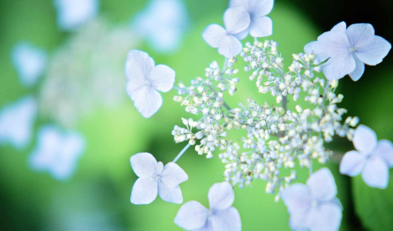 flowers, цветы, color, cvety, пастель, you,