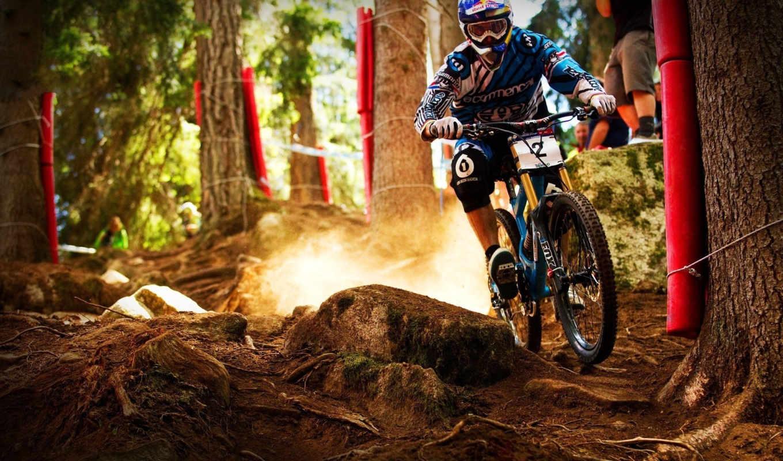 велосипед, тропинка, race, лес,