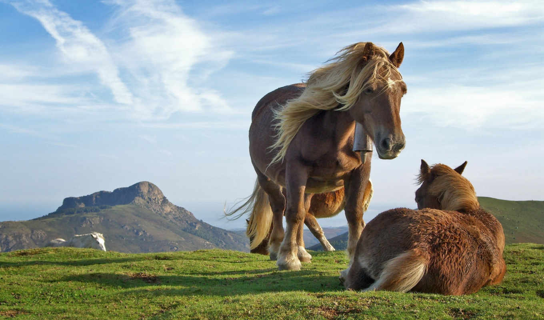 кони, zhivotnye, лошади, грива, пламя, лошадь,