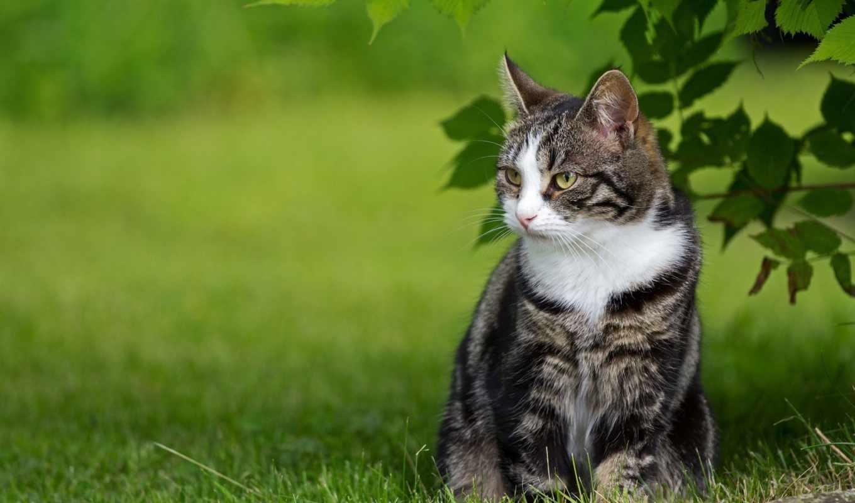 mövzularda, кошка, hissə, şəkillər, кошки, животные, траве, трава, сидит, garcya, зеленой,