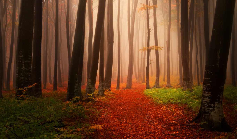 природа, заставки, мыши, красивые, правой, обоях, деревья, закат, click, кнопкой, iphone,