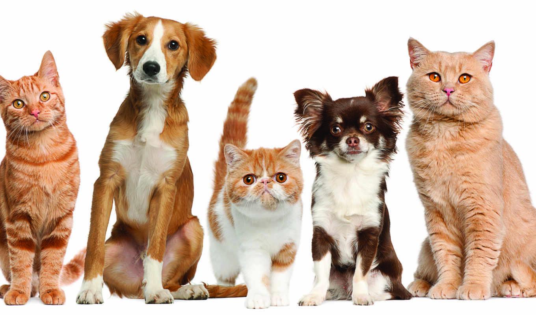 собак и кошек скачать