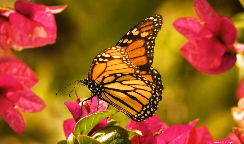 бабочка, цветы, макро, насекомые, wings,