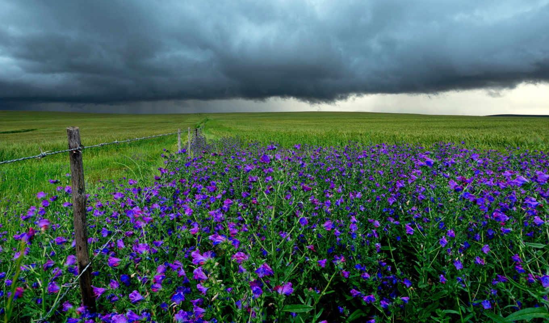 буря, поле, landscape, clouds, природа,