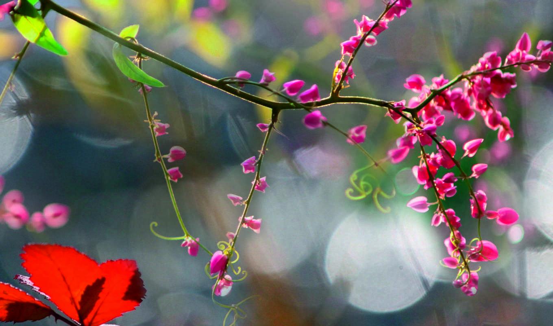 природа, images, profile, pictures, uncategorized, картинка, море, free,