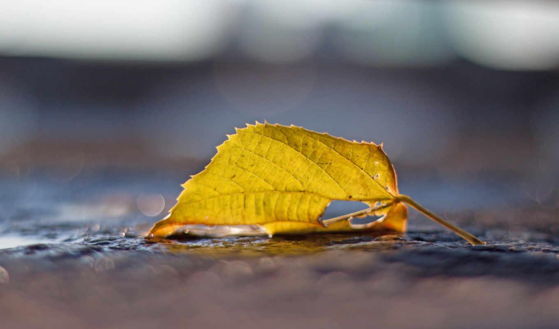 лето, осень, еда, оружие, любовь, августа, напитки, одинокий, авиация, apple, tech, windows,