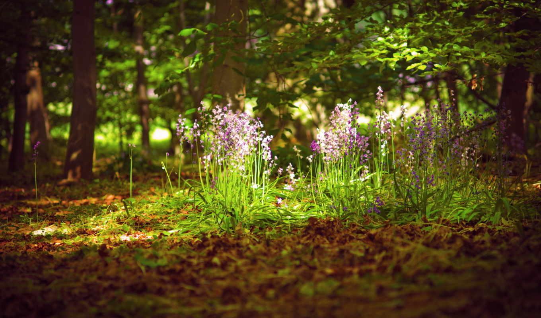 summer, цветы, природа, лес, свет,