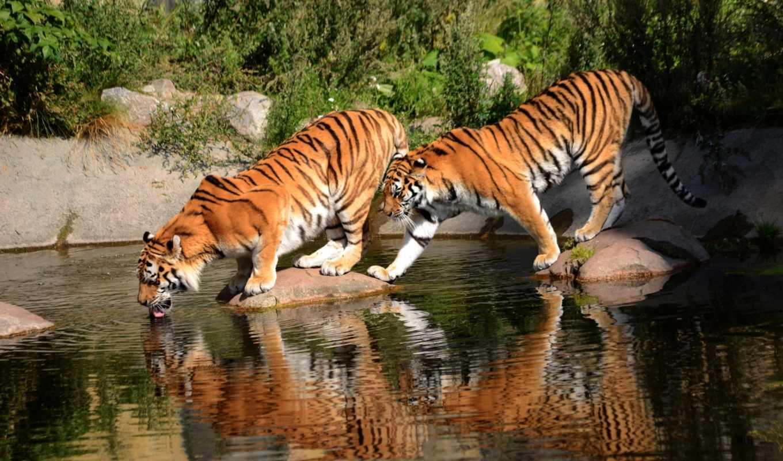 fotos, mundo, del, mejores, imagenes, facebook, para, tiene, con, tigres, album, descripción, este,