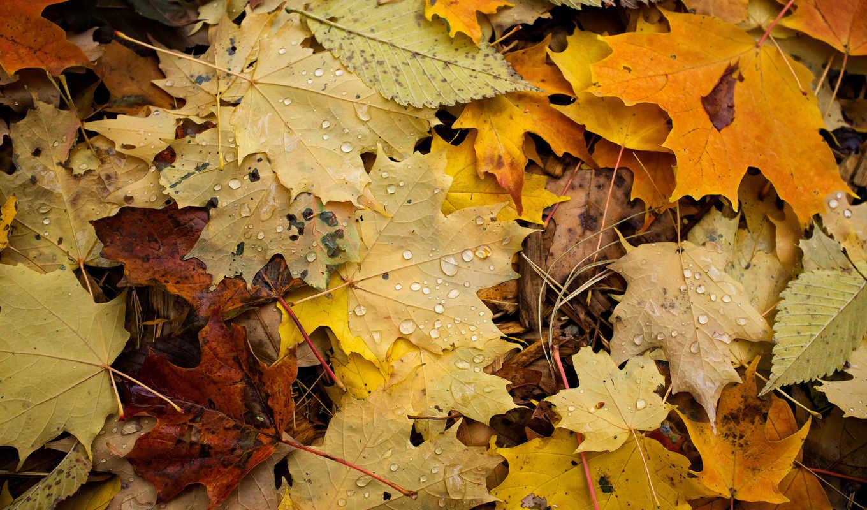 цветы, макро, планом, капли, листва, крупным, аватарки, осень,