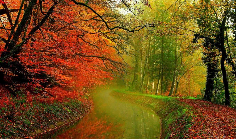 природа, дек, trees, река, лес,