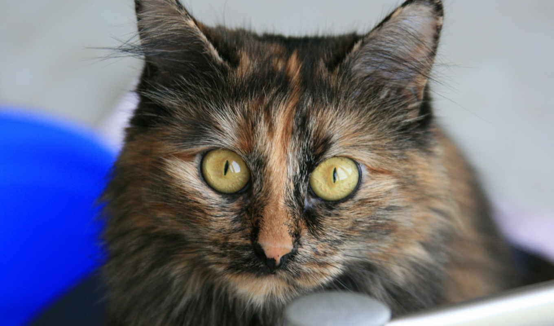 кошка, кошки, животное, glaza, vzglyad, zhivotnye,