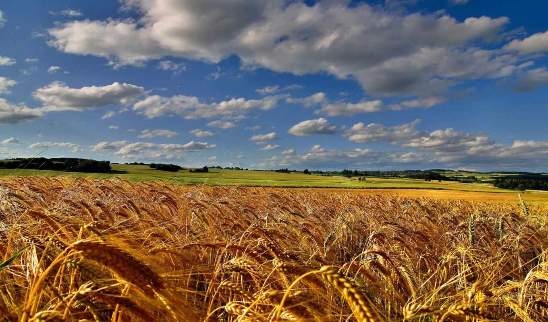 поле, пшеница, небо, funart