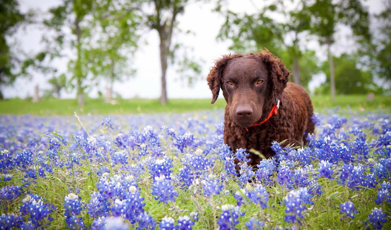цветы, природа, собака, картинка, картинку,