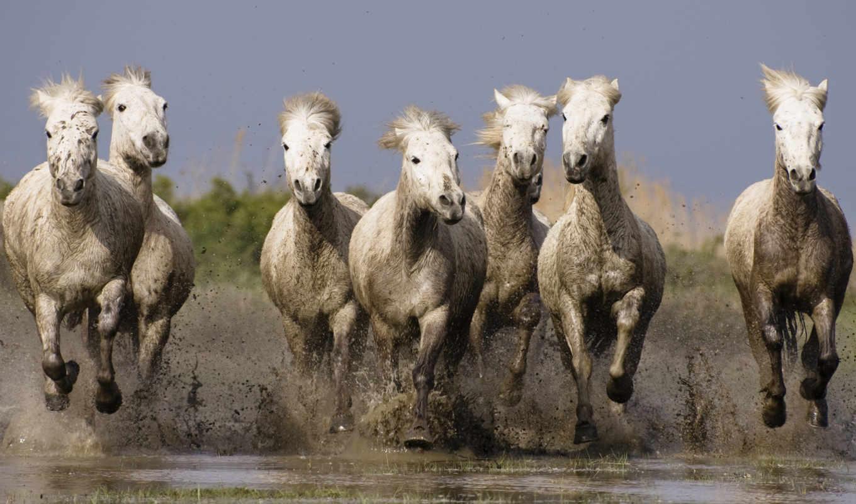 лошади, стадо, лошадей, лошадь,