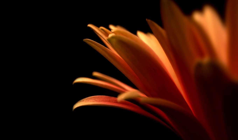 full, nevseoboi, красивые, графика, быстро, качественные, эти, amazing, airena, цветы,