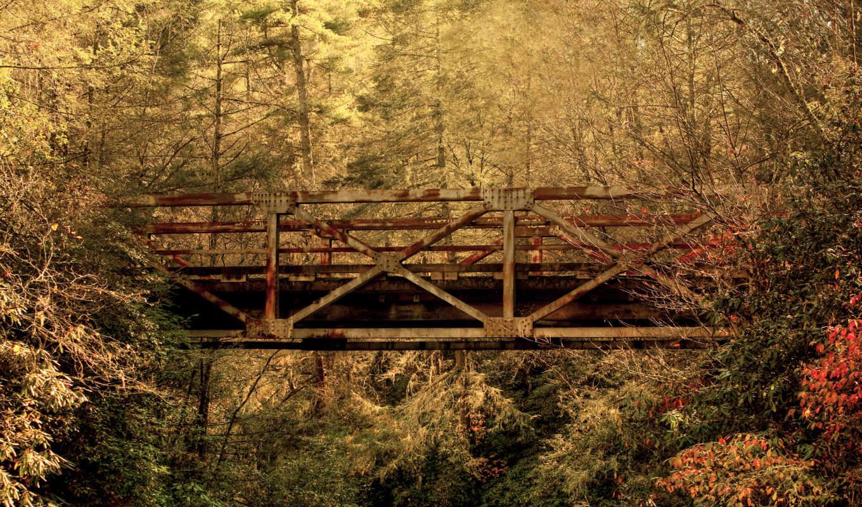 мост, осень, листья, старый, лес, carolina, пейзажи -, южная,
