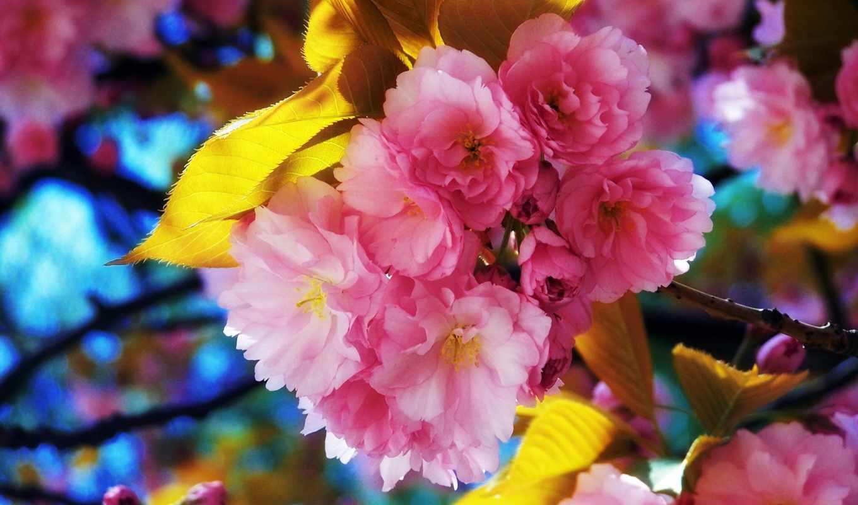 цветы, flowers, красивые,