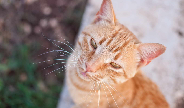 pinterest, corgis, кошки, самые, ideas, funny, взгляд, кот, фотографий,