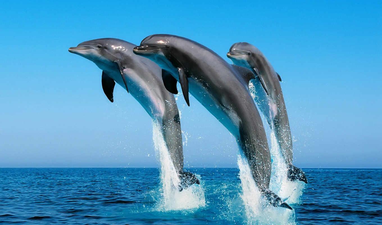дельфины, море, дельфинов, они,