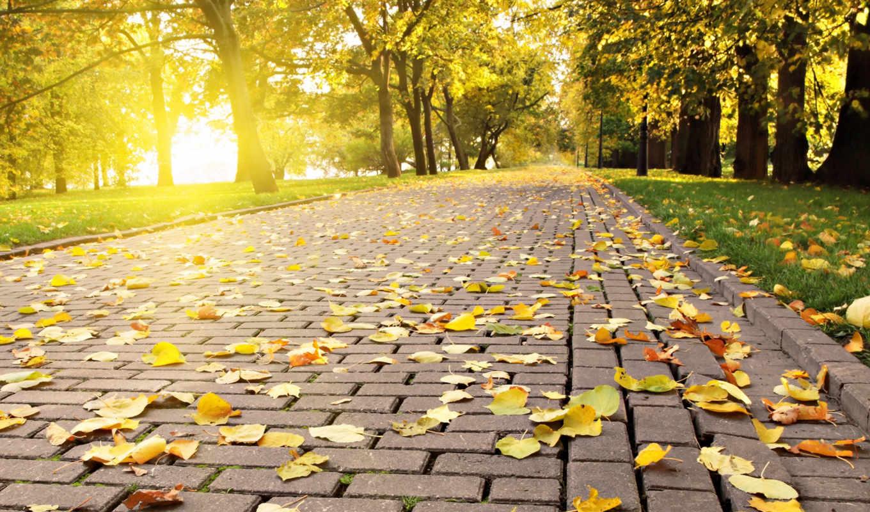 красивые, осень, качественные, nevseoboi, самые, even, бе, могут,