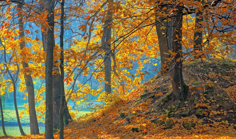лес, природа, осень, деревя, красивые,