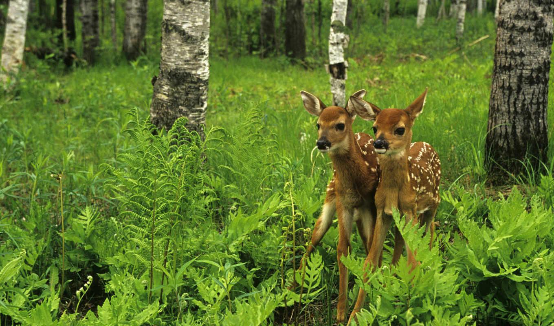 animal, лань, fotografia, лес, cute, fawn,
