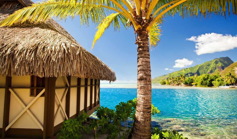 palm, море, пляж, tropic, tropical, sun, изба, summer, бунгало, ocean