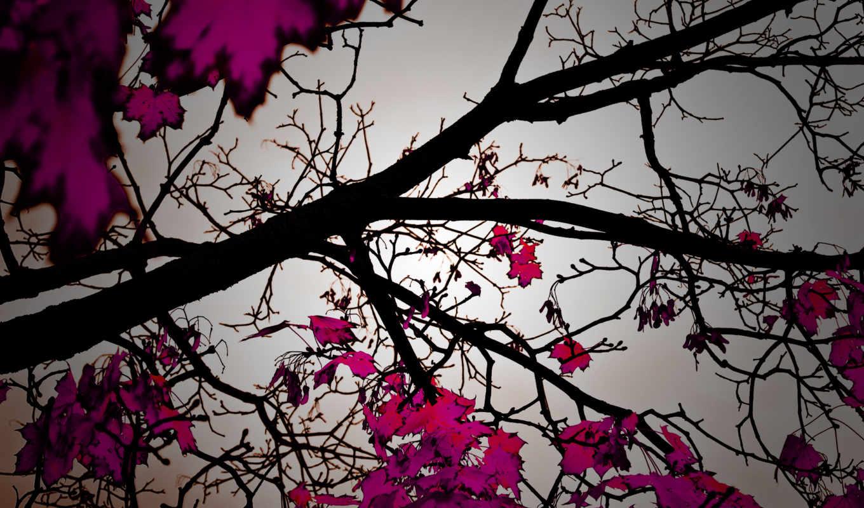 листья, осень, природа, деревья, дерево, смотрите, осенние, листопад, красивые, романтика, листва, еще, другие,