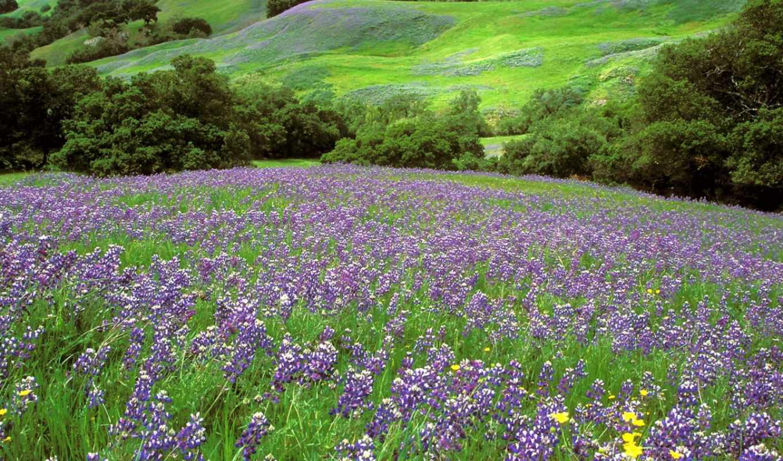 цветы, полевые, часть,