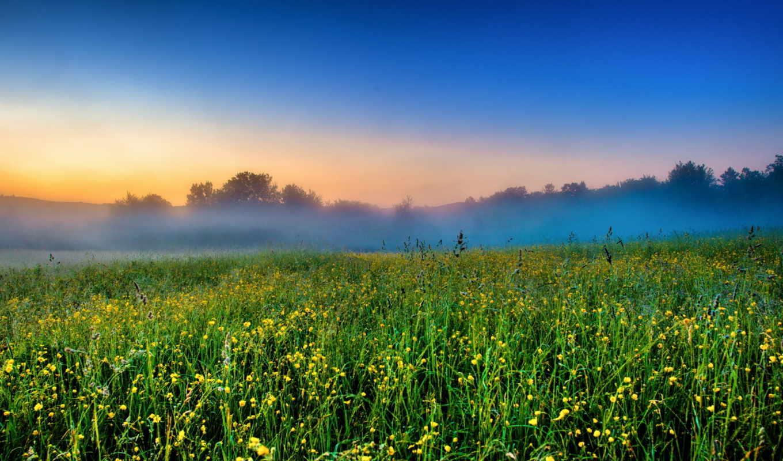 утро, туман, луг, восход,